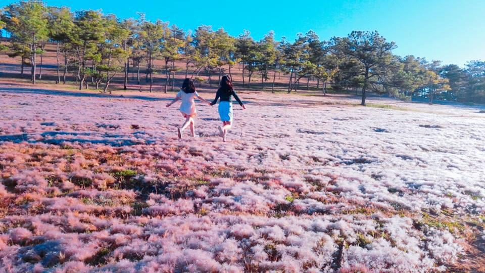 """Chỉ còn 1 tháng nữa Đà Lạt vào mùa cỏ hồng đẹp tựa nàng thơ, bạn đã sẵn sàng để """"tim đập thình thịch"""" chưa?"""
