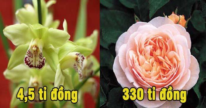 Sửng sốt 8 loài hoa đắt nhất thế giới có giá trị bằng cả gia tài