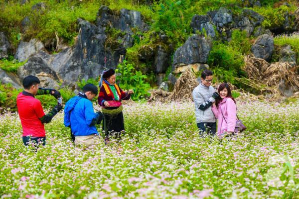Lên Hà Giang ngay thôi em ơi, Lễ hội Hoa Tam Giác Mạch rực rỡ nhất năm đã về đây rồi!