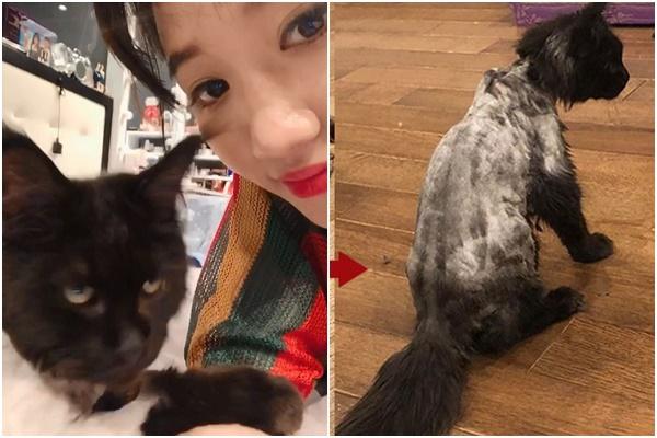 """Bị Hari Won cạo sạch lông vì tưởng ghẻ, Trấn Thành đưa mèo đi """"tút tát nhan sắc"""" và thành quả"""