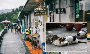 """Houtong - Thánh địa mới toanh dành cho những """"kẻ cuồng mèo"""", lôi kéo loạt """"sen"""" tới Đài Loan tìm """"boss"""""""
