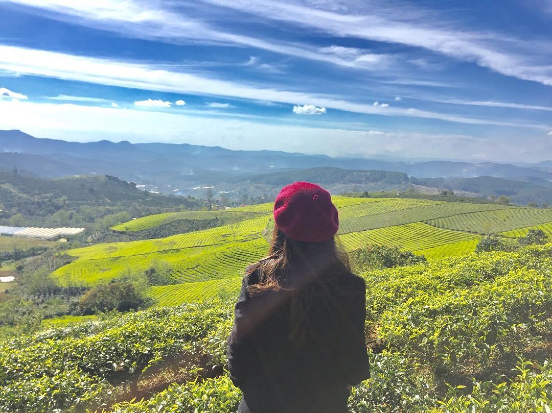 """Tha hồ """"diễn sâu"""" tại đồi chè trăm tuổi cực hot ở Đà Lạt, màu trà xanh ngát xanh chụp góc nào cũng đẹp"""