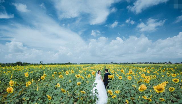 Thêm một vườn hướng dương phủ vàng ở Thái Bình hơn 2ha cực rộng, các tín đồ sống ảo phải hú hét vì quá ưng