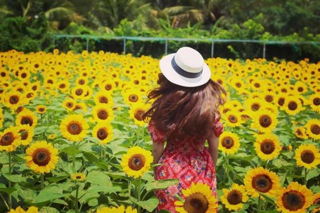 """""""Phát sốt phát rét"""" giữa cánh đồng hoa hướng dương siêu đẹp gần xịt Sài Gòn, khỏi cần đi Đà Lạt làm gì cho mệt"""