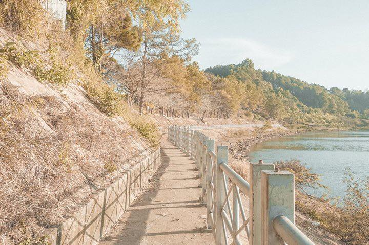 Cứ ngỡ lạc vào mùa thu xứ Kim Chi ở con đường lá vàng phiên bản Gia Lai này!