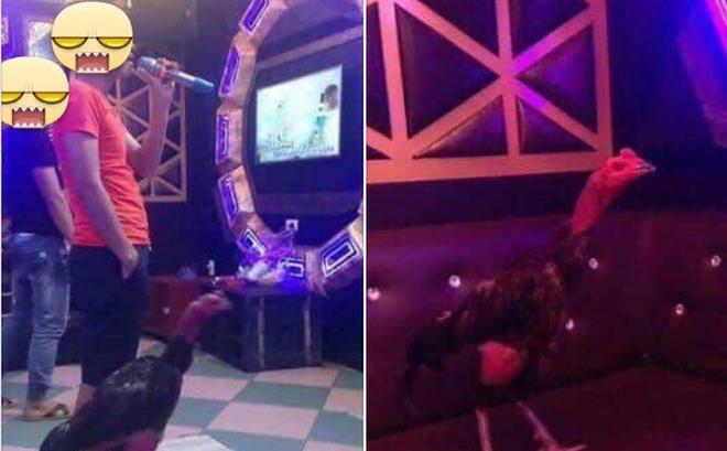Cô vợ đòi ly dị vì chồng mê gà hơn vợ: Đang ân ái nhảy bổ xuống kiểm tra chuồng, đem cả gà đi hát karaoke