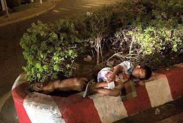 Dân mạng truy tìm danh tính cậu bé bán vé số ngủ gục trên dải phân cách cùng chú chó cưng