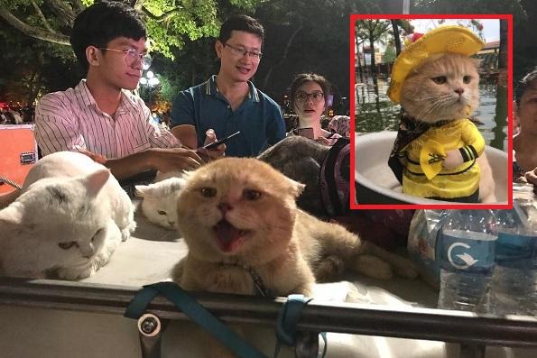 Chủ nhân chú mèo tên Chó nổi tiếng mạng xã hội bị tố tàn nhẫn với thú cưng và màn đáp trả cực gắt