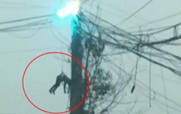 Kinh dị cảnh tượng thợ điện bị treo lủng lẳng trên đường dây điện cao áp đang bốc cháy