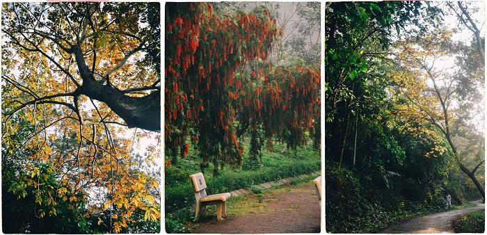 Vào thăm khu rừng tuyệt đẹp và duy nhất ở Việt Nam nằm trong khuôn viên trường đại học