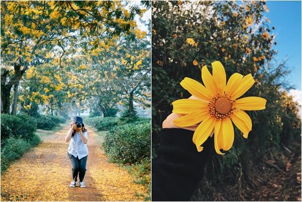 """Ngỡ như đang ngao du """"xứ Hàn"""" khi mùa hoa muồng nở vàng rực góc trời Gia Lai"""