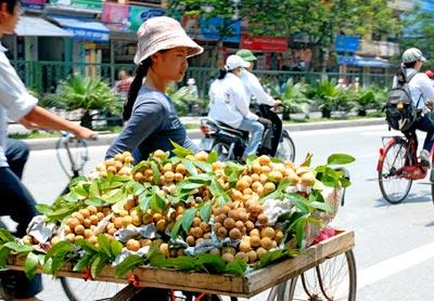Hà Nội tiêu thụ 52.000 tấn hoa quả mỗi tháng nhưng việc kiểm soát chất lượng ra sao?