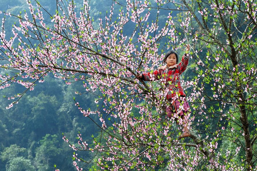 Lên Mù Cang Chải mà coi em ơi, TẾT đã nở đầy trên những cánh đào hồng đây rồi!