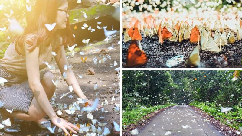 """Về ngay Cúc Phương - Ninh Bình mà checkin nốt """"concept"""" Hàm Hương công chúa kẻo hết mùa bướm tháng 4"""