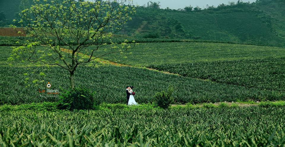 """Xuất hiện """"nông trại dứa"""" lên hình bao đẹp, sát xịt khu du lịch Tràng An - Ninh Bình"""