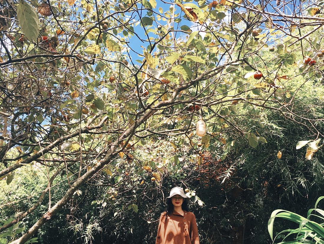 Tháng 10 rồi kéo nhau lên Đà Lạt check-in vườn hồng tưng bừng nở rộ ngay thôi