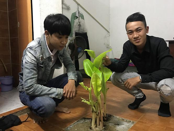 """Đến phòng trọ có """"cây chuối thần"""" của sinh viên Đà Nẵng để khám phá bí ẩn dưới nền nhà"""